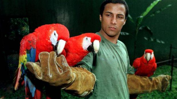 """Sudamérica es el """"paraíso"""" de las aves silvestres"""