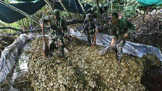 El Perú superó meta de erradicación de hoja de coca ilegal para este año