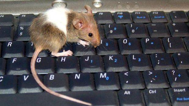 Científicos logaron revertir el proceso de envejecimiento en ratones