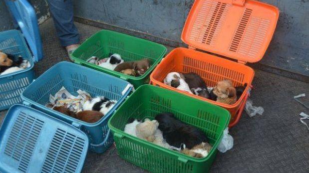 Responsables por venta ilegal de perros recién nacidos pagarán S/.185