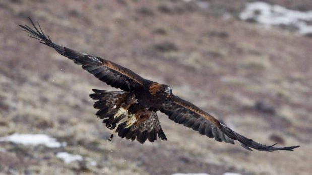 FOTOS: Espectaculares imágenes de la caza con águilas en Kazajistán