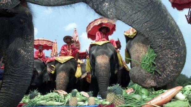 El turismo pone en peligro al elefante salvaje en Tailandia