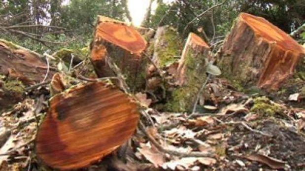 Las cinco claves para salvar los bosques en el mundo