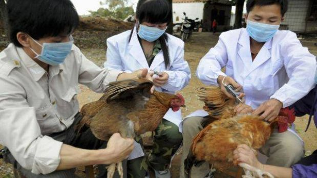 China: a 33 aumentan los afectados por nueva cepa de gripe aviar