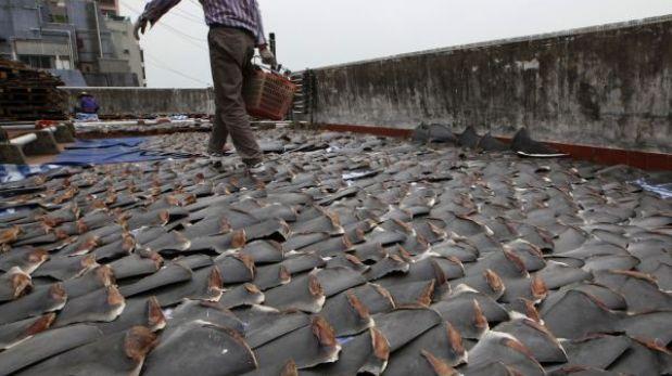 La codicia por las aletas de tiburón extingue a dos especies en el Pacífico