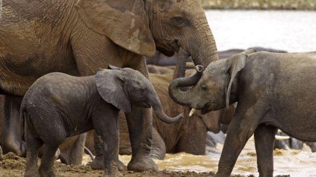 Europa flexibiliza la importación de mamíferos en peligro de extinción