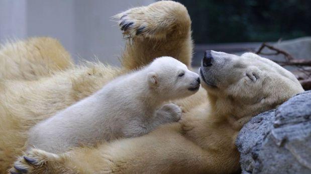 FOTOS: el cuidado y dedicación de las madres del reino animal con sus crías