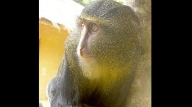 """El """"top ten"""" de especies raras descubiertas recientemente"""