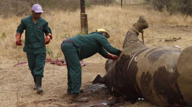 Cazadores furtivos mataron 350 rinocerontes en Sudáfrica durante el 2013