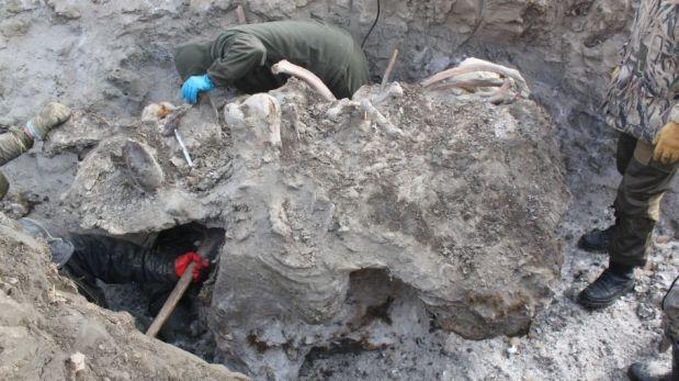 FOTOS EXCLUSIVAS: tejidos intactos y sangre líquida de mamut hallados en una remota isla ártica