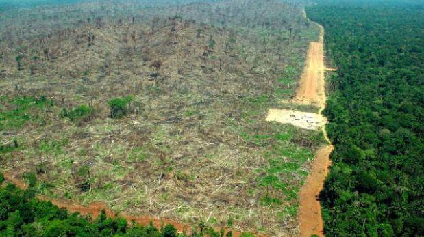 La deforestación causaría impactos negativos en la evolución de las plantas