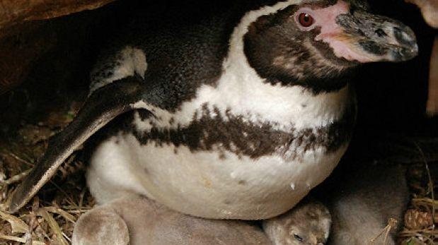 FOTOS: los nacimientos silvestres son la nueva atracción en un zooológico de Reino Unido
