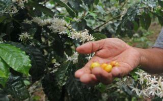 Minagri: exportaciones agrícolas caerán entre 20% y 25% este año