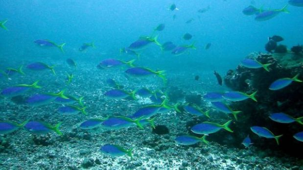 Los océanos: la penúltima frontera de la humanidad