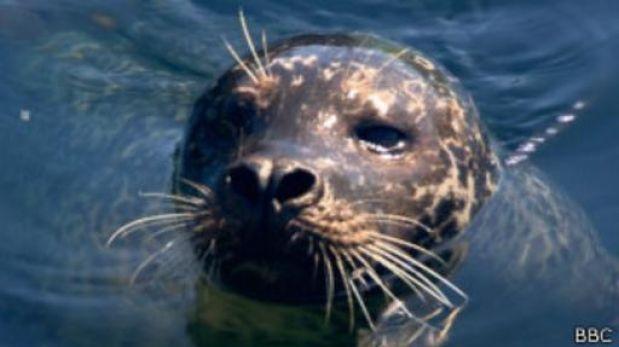 ¿Qué mamífero puede bucear más tiempo?