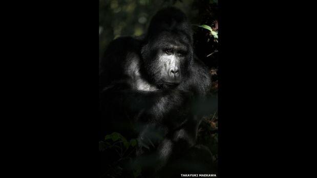 FOTOS: la vida secreta de los animales silvestres