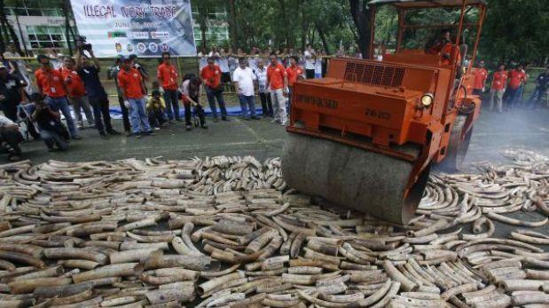 Filipinas destruye toneladas de marfil para combatir el comercio ilegal