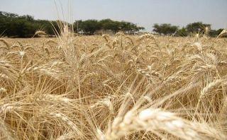 El Ministerio de Agricultura será Ministerio de Agricultura y Riego