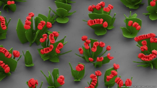 FOTOS: la belleza de las flores microscópicas nos muestran cómo funciona la evolución