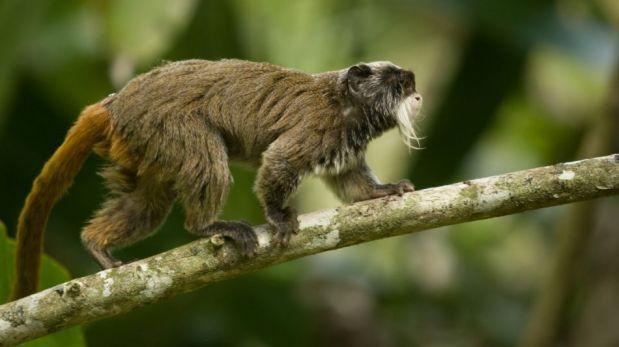 FOTOS: un safari fotográfico por la Amazonía del Perú
