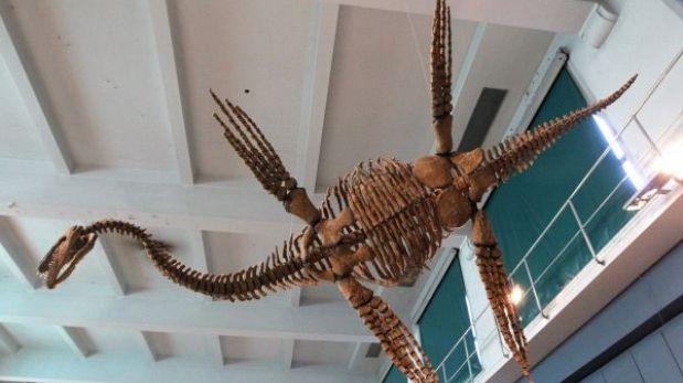 """FOTOS: un """"monstruo de los mares"""" se exhibe en Buenos Aires"""