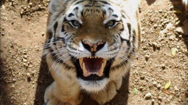 Cinco indonesios llevan tres días en un árbol para huir de tigres