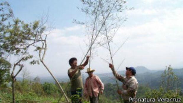 """Restaurador ecológico, la profesión de los """"fanáticos de la naturaleza"""""""