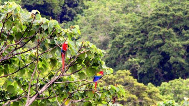 Costa Rica agregó 5 mil nuevas especies a su riqueza natural
