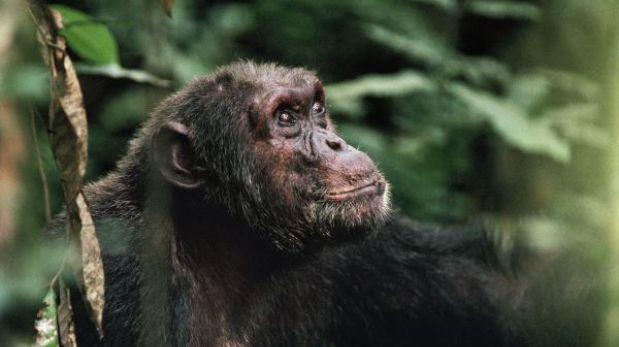 Petrolera amenaza al primer parque nacional de África