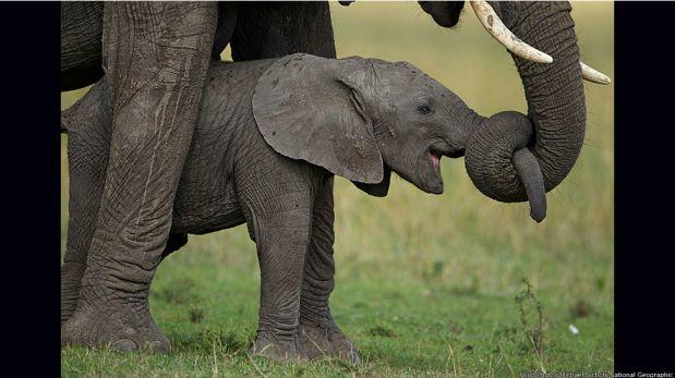 FOTOS: postales de la vida silvestre