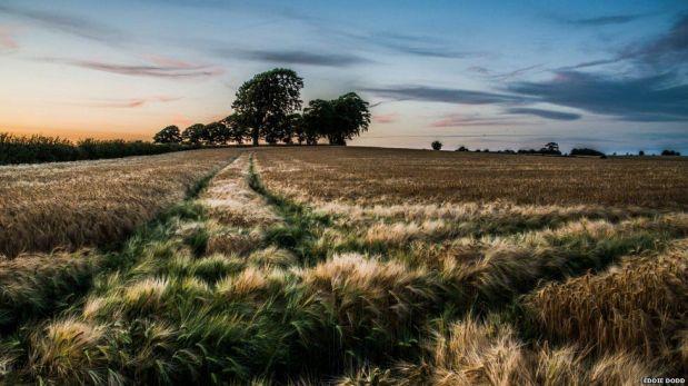 FOTOS: la vida en el campo, un pacto con la naturaleza