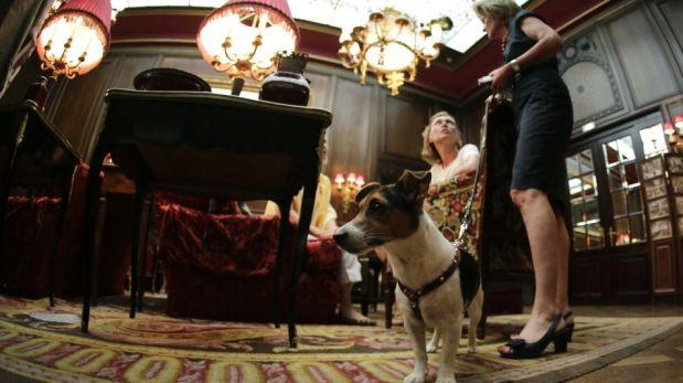 FOTOS: un hotel en Viena en el que tu mascota también tendrá una estadía de lujo