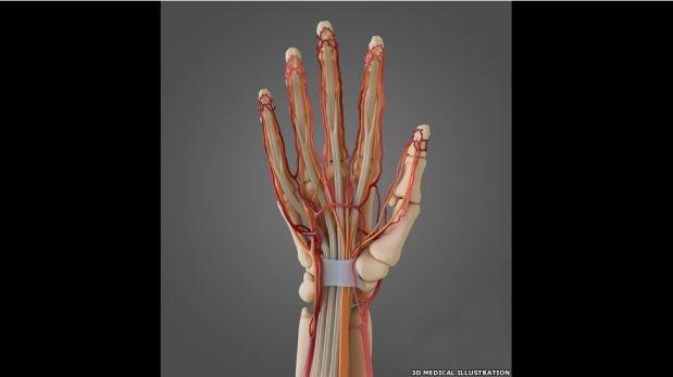 FOTOS: anatomía del artista médico, una figura indispensable de la ciencia