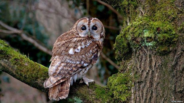 FOTOS: los personajes que habitan en los bosques de Gran Bretaña