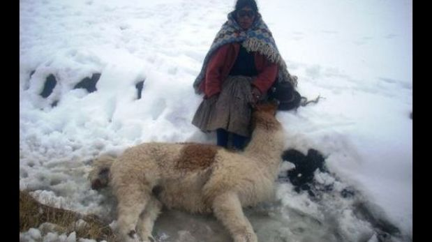 Heladas: más de 25 mil animales murieron por nevadas en la sierra sur