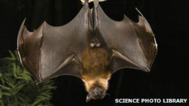 Cientos de miles de virus desconocidos circulan entre los animales