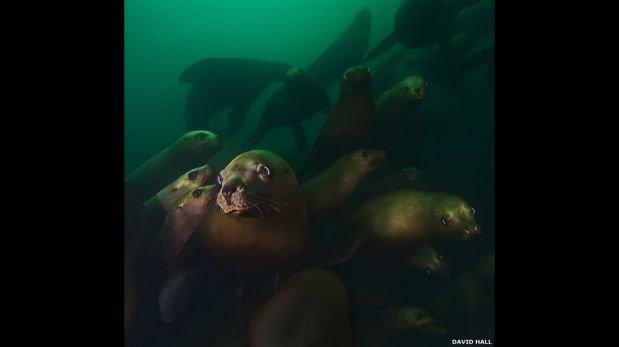 FOTOS: la belleza oculta bajo las gélidas aguas del Pacífico