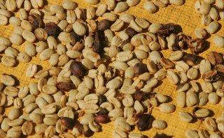 Exportaciones de café crecieron 12,66% en la última cosecha