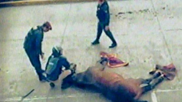 Policía aclara que caballo murió tras resbalarse y no por ataque de barristas de Alianza