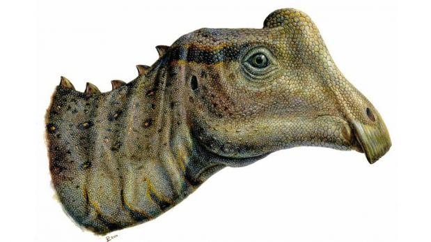 """El hallazgo y la reconstrucción del dinosaurio bebe """"Joe"""" [FOTOS]"""