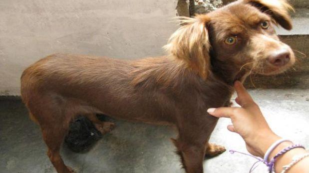 Unos 100 perros esperan ser adoptados: conoce dónde los puedes encontrar