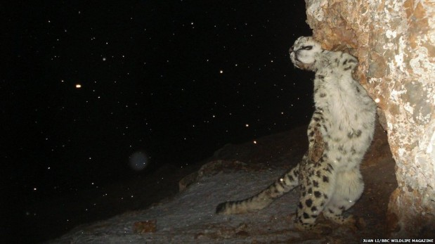 """Las mejores imágenes de animales captados """"in fraganti"""""""