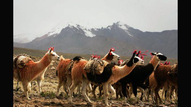 Coropuna, el nevado que se deshiela y pone en riesgo los cultivos en Arequipa [FOTOS]