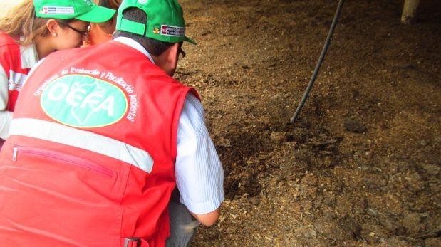 Pobladores de Naplo culpan a granja avícola por plaga de moscas
