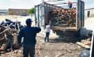 Piura pierde 20.800 hectáreas de bosques cada año