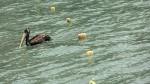"""""""Playas privadas"""": estos son los casos en lo que va del verano - Noticias de difusióhn"""