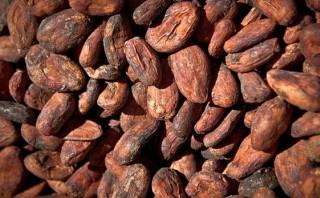Exportación peruana de cacao crecería más de 8% este año
