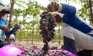 El potencial agroexportador del valle de Majes