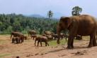 Sri Lanka: tierra de elefantes