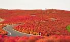 Mira este espectacular 'parque rojo' que deslumbra en Japón